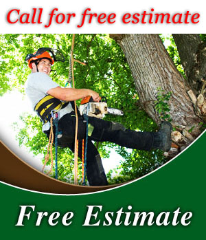 Call Clean Cut Tree Service Today For A Free Estimate