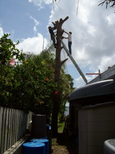 Huge pine tree removed out of a 10 foot space over the house. Didn't even crush a plant.