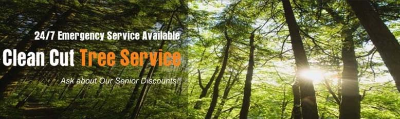 Clean Cut Tree Service & Stump Grinding, Inc